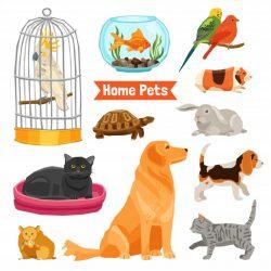 Aksesore per kafshet shtepiake